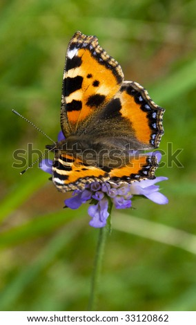 One Flower, One dreams, One LOVE! Alone butterfly. - stock photo