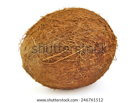 One fresh coconut on a white background - stock photo