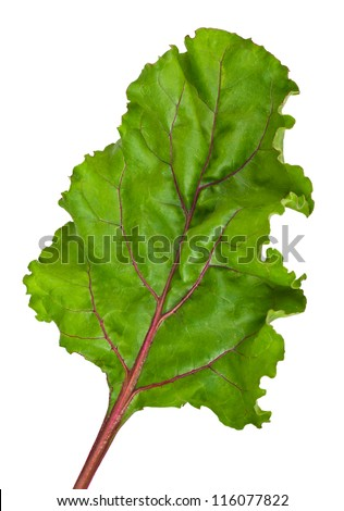 one fresh leaf beet root isolated on white background - stock photo