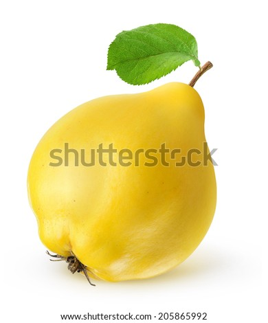 One fresh quince fruit with leaf over white background - stock photo