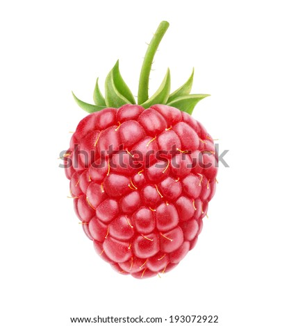 One fresh raspberry isolated on white background - stock photo