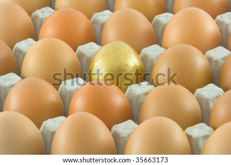 One golden and many ordinary fresh rural eggs packed into cardboard container - stock photo