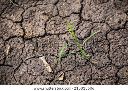 one grass on soil drought