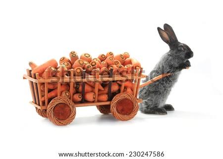 one gray rabbits vnut carrots - stock photo