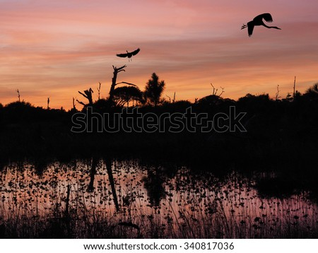 One Great Blue Heron Lands in Dead Tree as One Flies In Beautiful Sunset at Beach - stock photo
