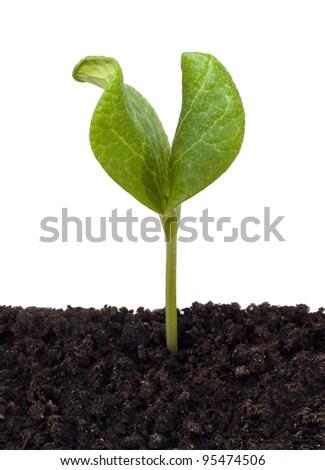 One green beginning in soil - stock photo