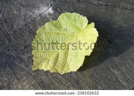 One green leaf in wood. - stock photo