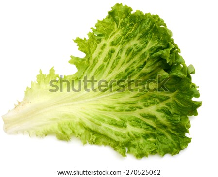 one green lettuce leaf on white background  - stock photo