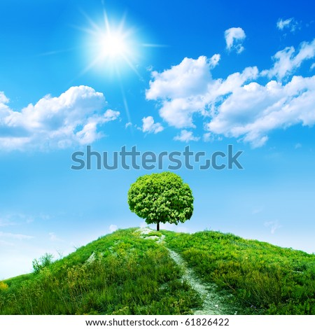one green tree on blue sky - stock photo