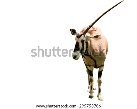 One-horn oryx - stock photo