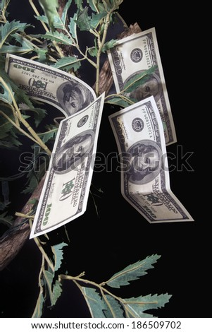 One hundred dollar bills growing off branches/Money Tree/Fake bills and branches - stock photo
