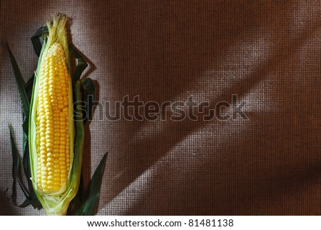 One indian corn ear on gray linen canvas, with copy space design ready - stock photo