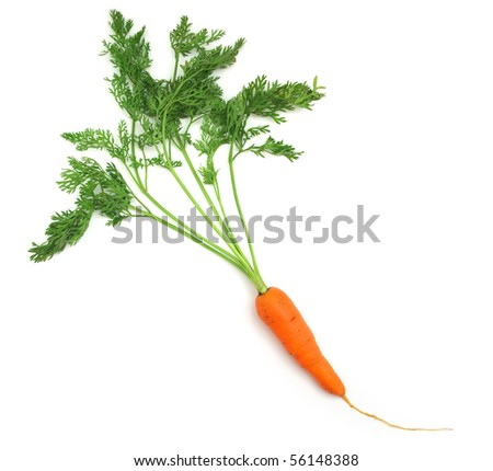 One isolated carrot. Element of food design. - stock photo
