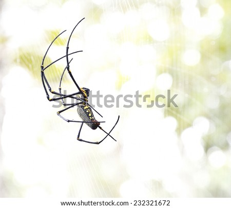 One kind of big spider is living in the forest. - stock photo