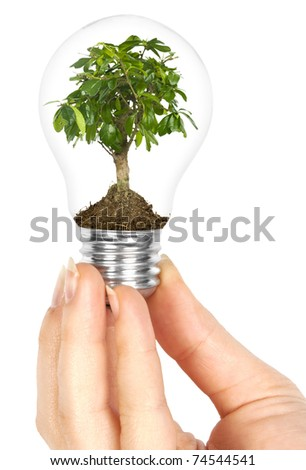 One lamp with plant inside in human hand on white background. Green energy concept - stock photo