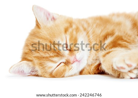 One little sleeping kitten cat of red colour - stock photo