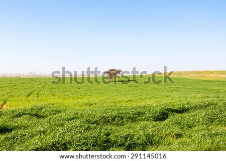 One lonely tree is a standing in a meadow of green grass - stock photo