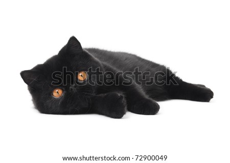One lying black exotic shorthair kitten cat isolated on white - stock photo