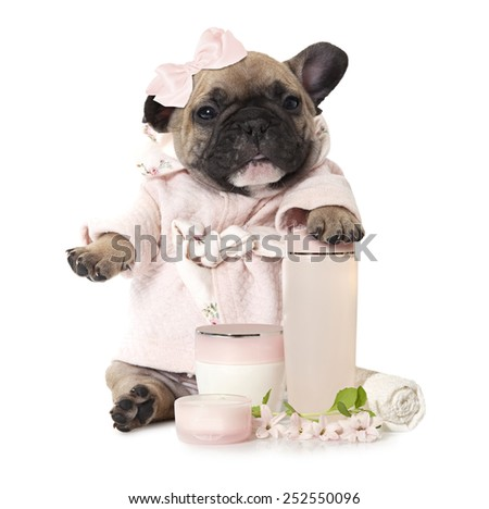 One month old French bulldog puppy with cosmetic products   - stock photo