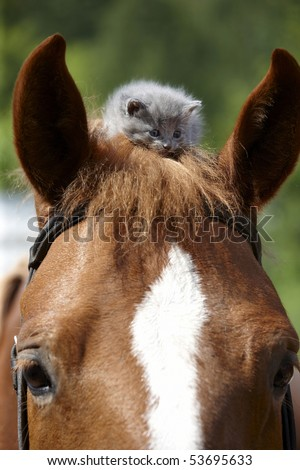 One month old grey kitten on the horse - stock photo