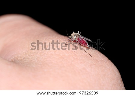 One mosquito on a human skin. - stock photo