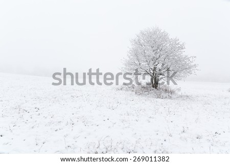 One mountain ash on a snowy field. Natural background.