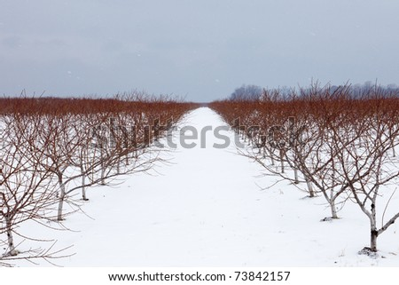One of the dozens of wineries in the region of Niagara on the Lake, Ontario, seen in the winter when the grapes have already been harvested and snow covers the ground. - stock photo