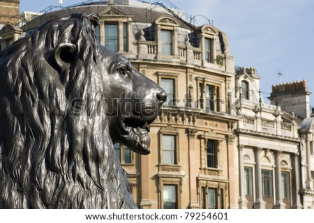 One of the four bronze lion statues at the base of Nelson's Column, Trafalgar Square, London.  Looking along Whitehall. - stock photo
