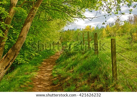 One of the many footpaths through Towerburn Woodland in Spring, near Jedburgh, Roxburghshire, Scotland UK - stock photo