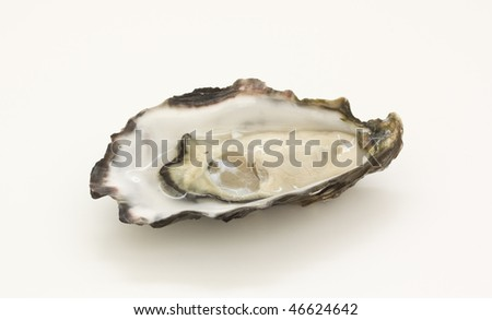 one oyster - stock photo
