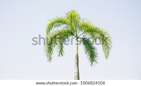 One palm tree against white background.