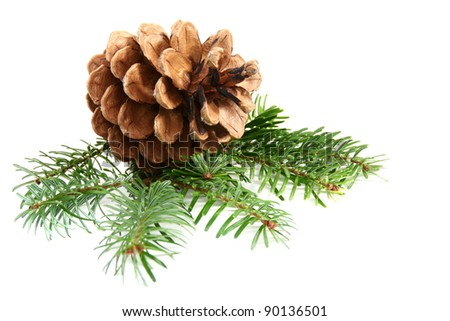 One pine cone with branch on a white background. - stock photo