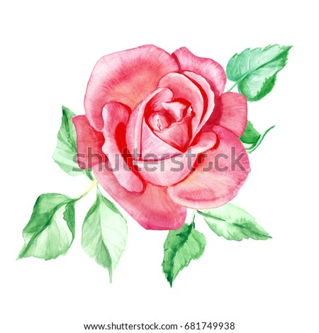 One pink rose watercolor painting wedding stock illustration one pink rose watercolor painting wedding drawings greeting card flower background m4hsunfo