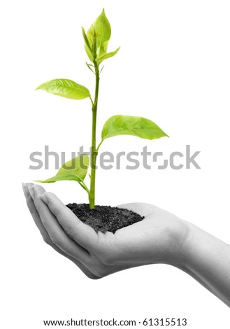 One plant in female hand on white background - stock photo