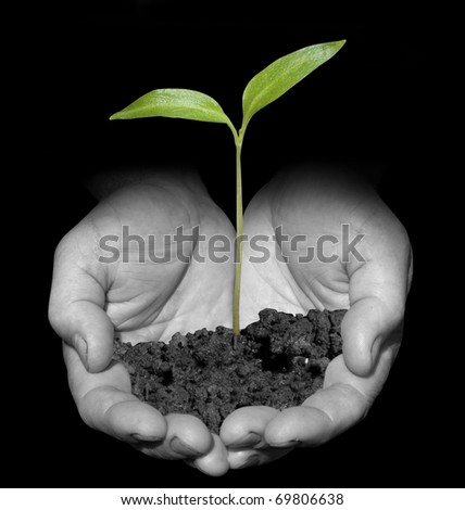 One plant in old male hands on black background - stock photo