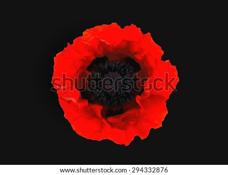 One red poppy isolated on black  background - stock photo