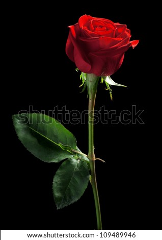 one red rose on a black background - stock photo