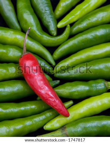 One red thai chili pepper lying on a bed of green thai chili peppers - stock photo