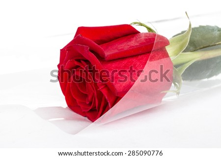 one rose bouquet on a white background