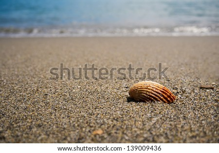 One seashell on the beach sand on a summer day