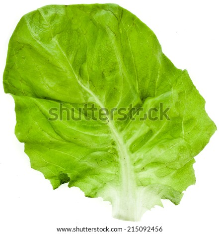 One Single Lettuce Salad Leaf Close up Top View Surface Isolated On White Background