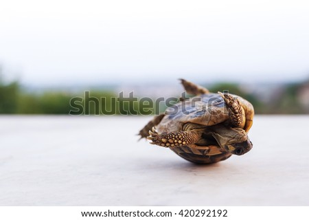 one small green turtle that lose balance - stock photo