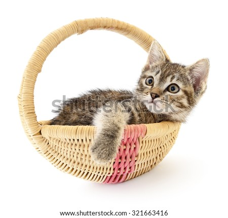 One small grey kitten sitting in a basket - stock photo