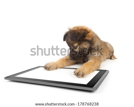 One tablet on white backgrounds dog stock photo edit now shutterstock one tablet on the white backgrounds and dog on the talet like ipades voltagebd Choice Image