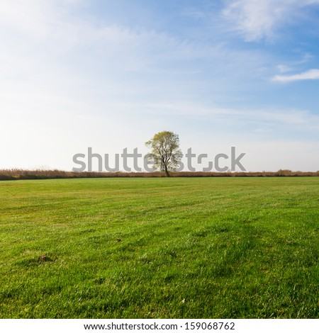 One tree and grass land - stock photo