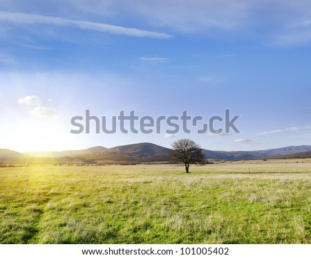 One tree in Field - stock photo