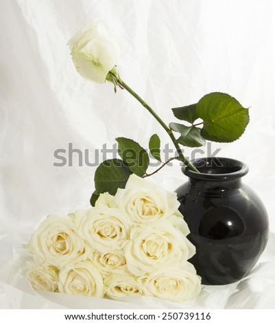 One white rose in a vase with the rest beside it - stock photo