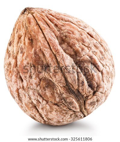 One whole walnut. File contains clipping paths.