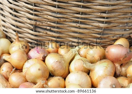 onion and wooden wicker basket. - stock photo