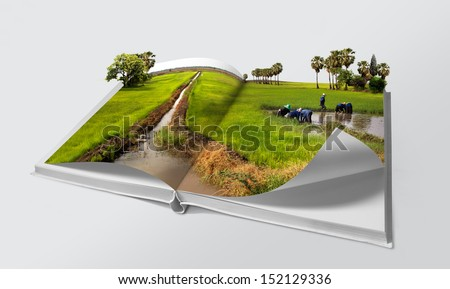 Open book in green rice fields - stock photo